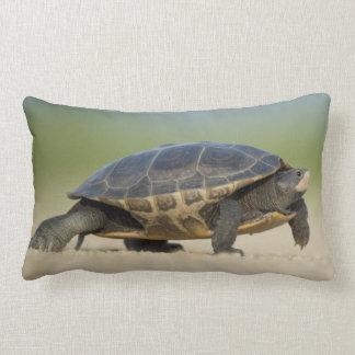 Turtle / Amphibian / Reptile Closeup Photo Pillow