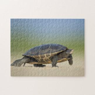 Turtle / Amphibian / Reptile Closeup Photo Puzzle