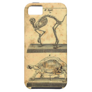 Turtle Anatomy iPhone 5/5S Case