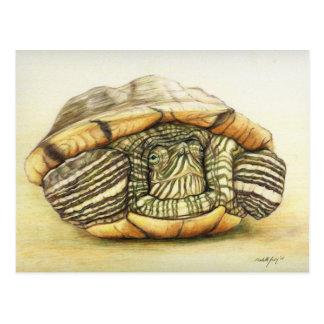 """Turtle"" Art Reproduction Postcard"