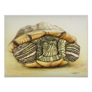 """""""Turtle"""" Art Reproduction Print Poster"""