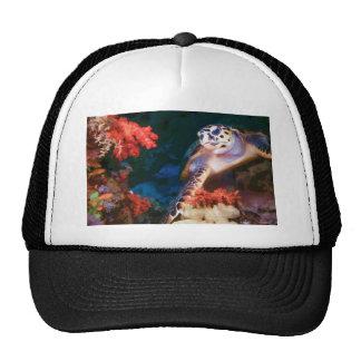 Turtle Cap