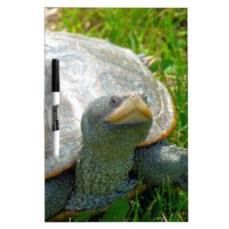turtle dry erase board