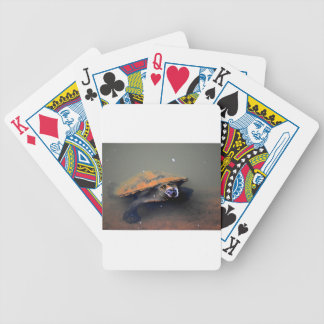 TURTLE EUNGELLA NATIONAL PARK AUSTRALIA BICYCLE PLAYING CARDS