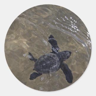 Turtle hatchlings 2 round sticker