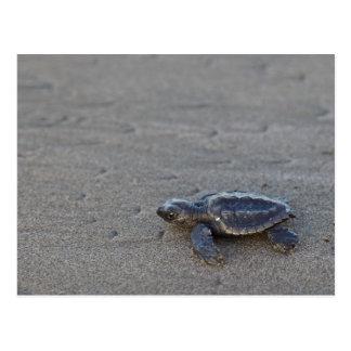 Turtle hatchlings postcard