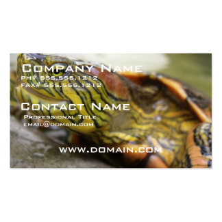 Turtle Identification Business Card