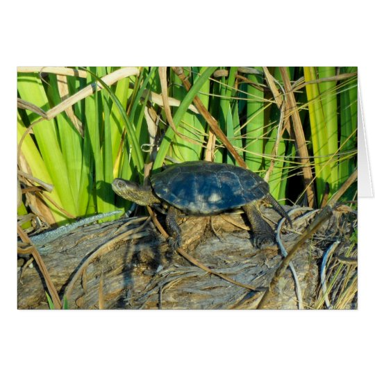 Turtle in the Sun Greeting Card