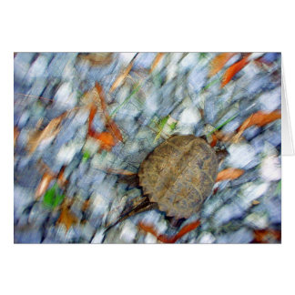 Turtle motion greeting card