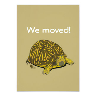 Turtle Moving Announcement