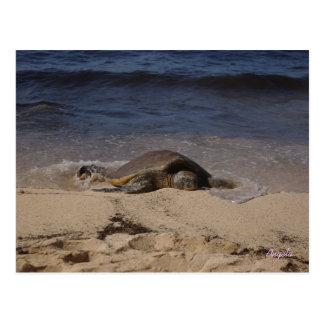 Turtle of Oahu Postcard