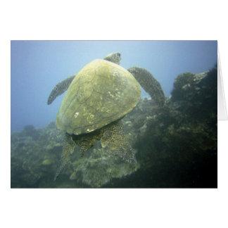 Turtle Pu'u Olai Card