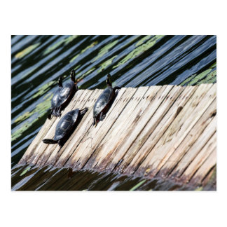 Turtle Rest Postcard