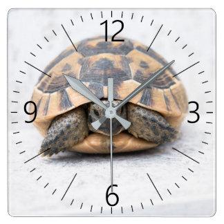 Turtle Square Wall Clock