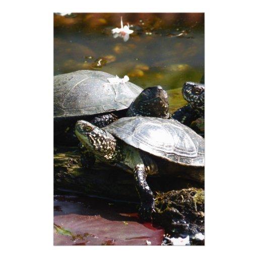 Turtle Stationery