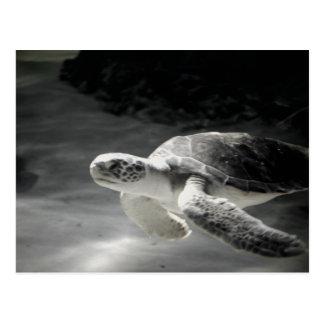Turtle tank Greetings Postcard