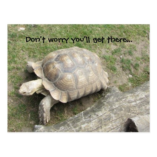 Turtle with Saying Post Card
