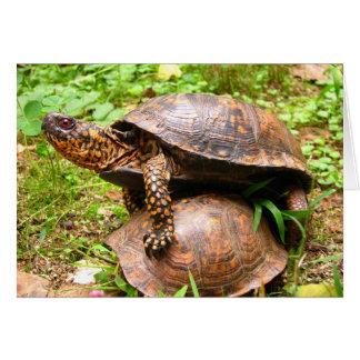 Turtles Card