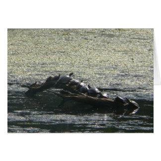 Turtles Turn Greeting Card