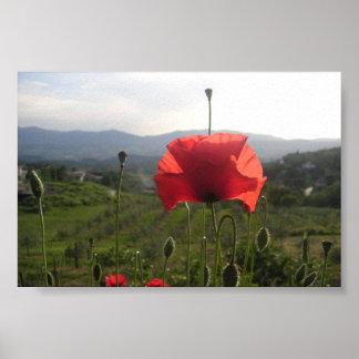 Tuscany Poppy Poster