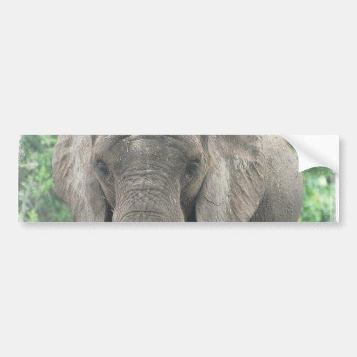Tusked Elephant  Bumper Sticker