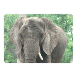 Tusked Elephant 13 Cm X 18 Cm Invitation Card