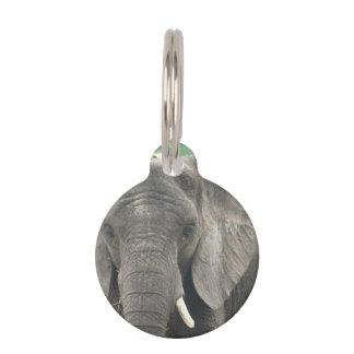 Tusked Elephant Pet ID Tag