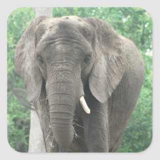 Tusked Elephant  Sticker