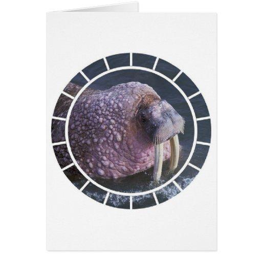 Tusked Walrus Greeting Card