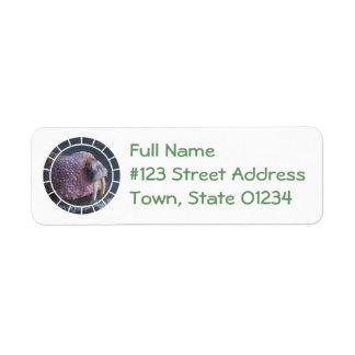 Tusked Walrus Mailing Label Return Address Label