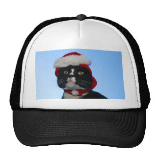 Tuxedo black and white cat with santa hat on trucker hats