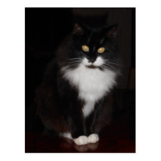 Tuxedo Cat Greetings Postcard