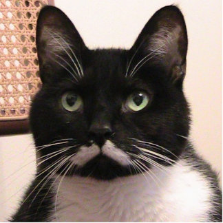 Tuxedo Cat Standing Photo Sculpture
