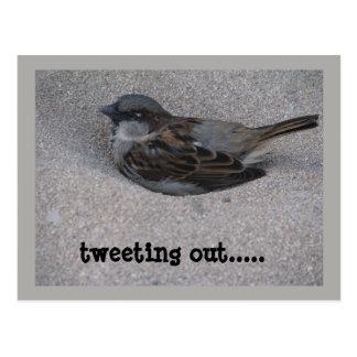tweeting bird postcard