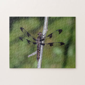 Twelve Spotted Skimmer Dragonfly Puzzle
