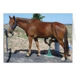 TWH Horse Farrier Hoof Care - Blank Inside