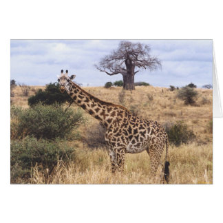 Twiga Masai (Masai Giraffe) Greeting Card