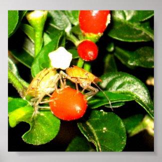 Twin Chili Bugs Print