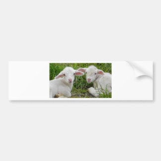 Twin Lamb Baby Animal Thinking Of You Bumper Sticker