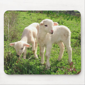 Twin Lambs Grazing Mouse Pad