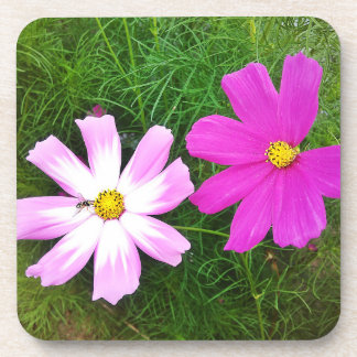 Twin Pink Cosmos Flowers Coaster