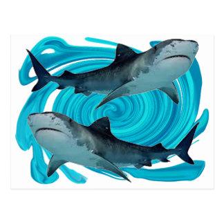 TWIN TIGER SHARKS POSTCARD