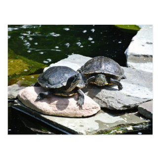 Twin Turtles - Postcard