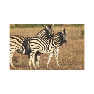 Twinning in Stripes Canvas Print