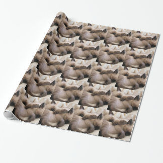 Twins Pet Cat Cute Siamese Kitten Wrapping Paper