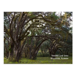 Twisted Live Oaks Postcard