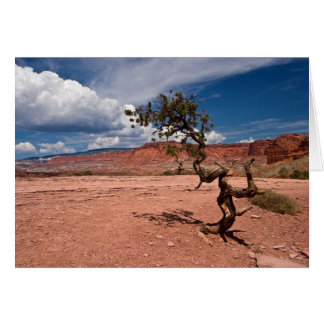 Twisted Pinyon Pine Tree Card
