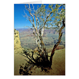 Twisted Tree At Edge Of Grand Canyon Greeting Card