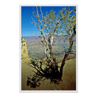 Twisted Tree At Edge Of Grand Canyon Print