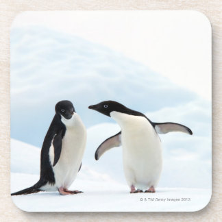 Two Adelie Penguins sitting on a sheet of ice Coasters